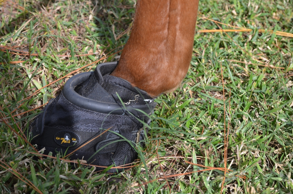 Fixing Feet- we have 6 tons of fresh sand, new Boots for Wiley and some anti-inflamatory meds
