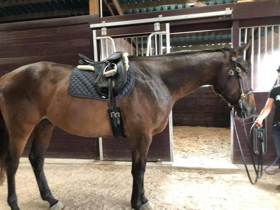 eliot saddle