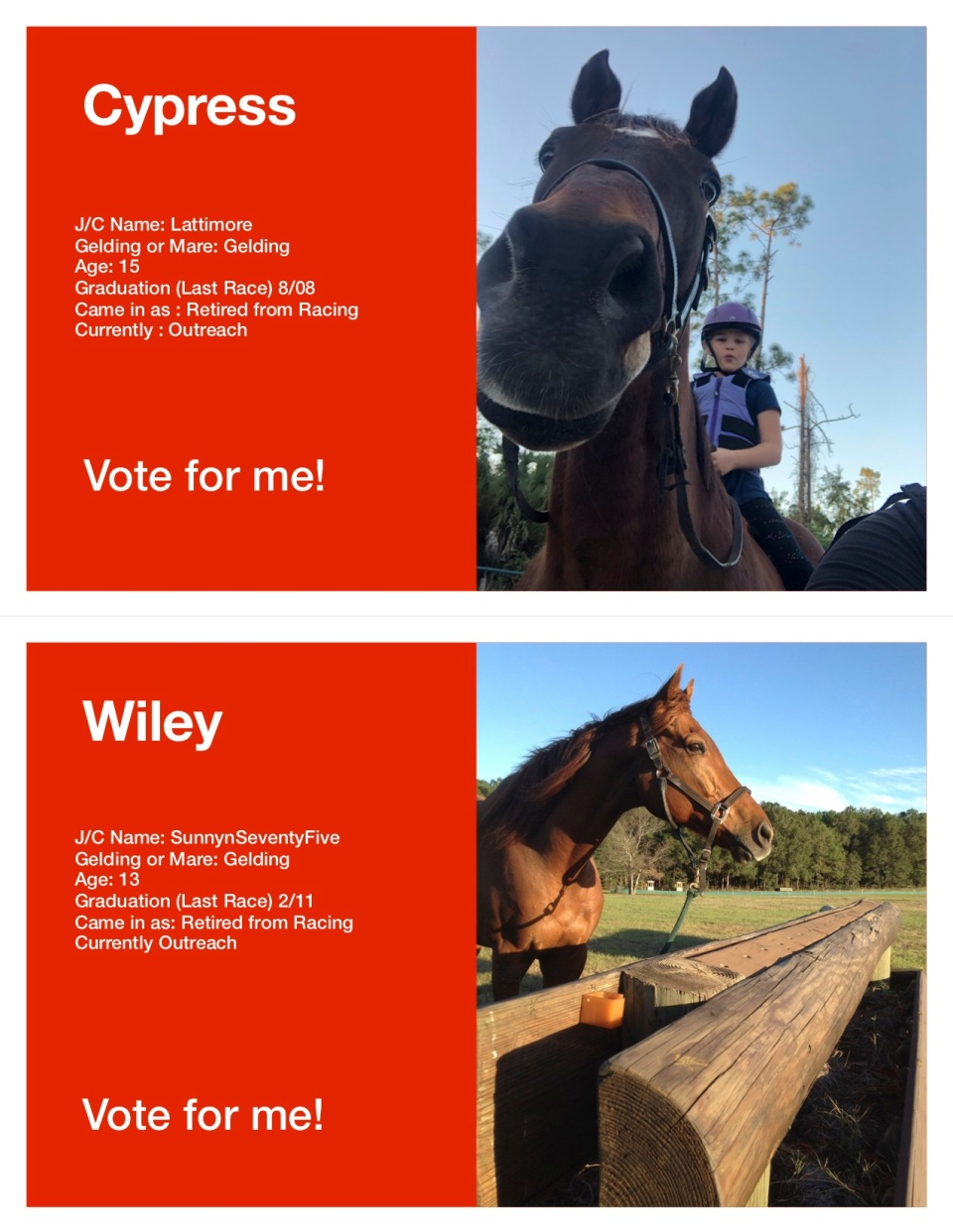 Horse Voting Sheets Template Wiley Cypress jpg